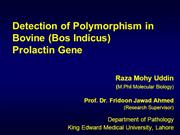 Detection of Polymorphism in Bovine Prolactin gene