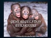 Gene Regulation eukaryotes