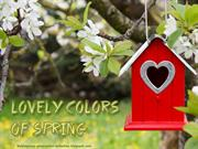 Lovely Colors of Spring (8)