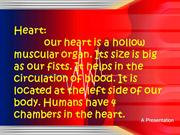 The basic functions of our heart.potx