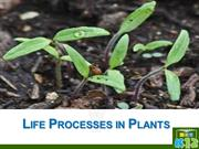 Life processes in Plants (X - WTS)