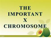 The Important X Chromosome