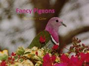 1-Birds-Pigeons-Fancy