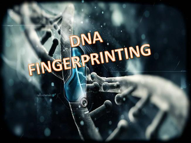 Dna fingerprinting authorstream malvernweather Choice Image