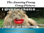 The Amazing Funny Crazy Pictures