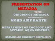 Origin of Metazoa by Asif