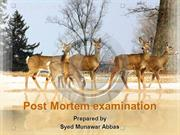 Post Mortem examination