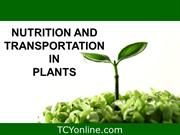 3. nutrition and transportation in plants_7th_JUN (30) (deepali)