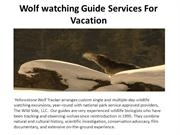 Wolf watching Guide Services For Vacation
