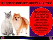 KEEP YOUR PET JOINTS HEALTHY