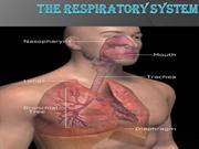respiratory-system-powerpoint