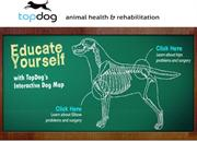 Topdog Health Pioneering In Animal Health and Rehabilitation