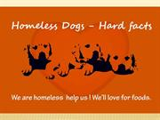 homeless dogs hard facts