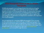 What Photography Classes to Take for Wildlife Photography