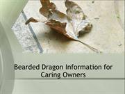 Bearded Dragon Information for Caring Owners