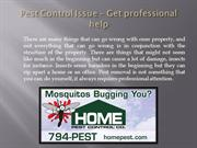 Pest Control Issue – Get professional help