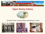 Send Your Cat In The Cat Hotel London