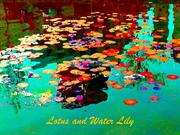 1-Summer-27-Lotus and Water Lily