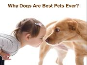 Why Dogs Are Best Pets Ever?