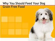 Why You Should Feed Your Dog Grain Free Food