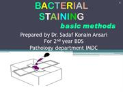 staining bacteria and morphology