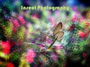 1-Insect Photography