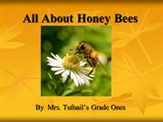 allabouthoneybees-100606155642-phpapp01