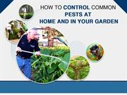 Pest Control Experts in West Palm Beach FL