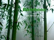 1-Tre-Bamboo-Sunset Ceremony