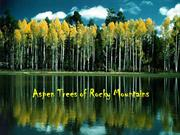 1-Tree-Aspen Trees of Rocky Mountains