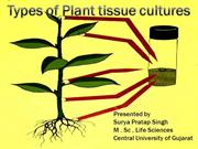 planttissueculture-131009100445-phpapp01