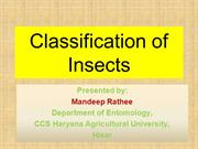 classification of insects