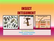 Insect Cuticle or The Insect Integument