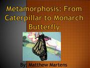 Metamorphosis: Caterpillar to Monarch