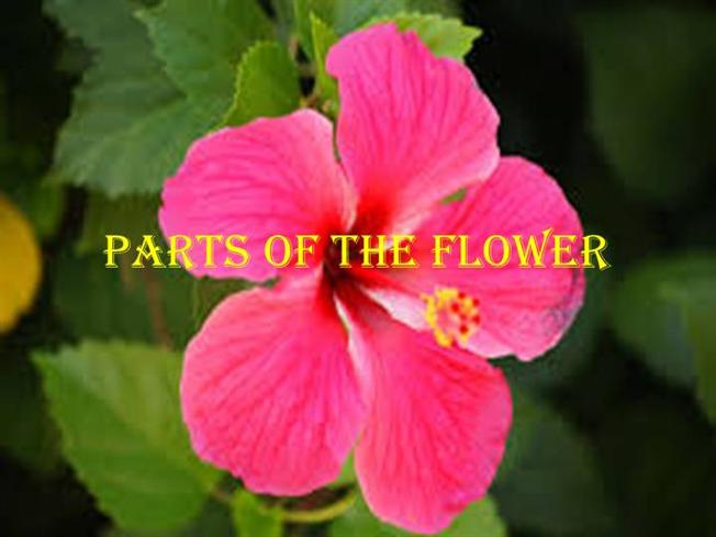 Free powerpoint presentations about parts of a plant for kids.
