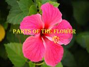 PARTS OF THE FLOWER]