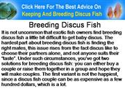 Breeding Discus Fish