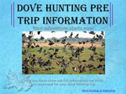High Volume Dove Shooting In Argentina - SYC Sporting