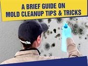 Mold Removal in Indiana - Professional and Timely Service!
