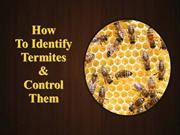 How to Identify Termites and Control Them