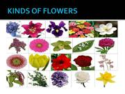 KINDS OF FLOWERS
