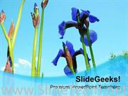 IRIES FLOWER WITH BLUE BACKGROUND POWERPOINT TEMPLATE