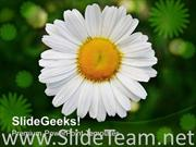WHITE DAISY FLOWER WITH GREEN BACKGROUND POWERPOINT TEMPLATE