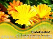 YELLOW DAISY FLOWER BACKGROUND POWERPOINT TEMPLATE