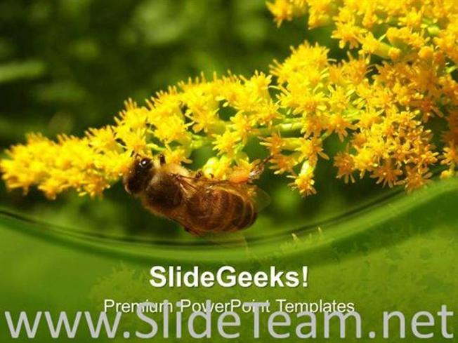 Honey Bee With Yellow Flowers Powerpoint Template Powerpoint Template