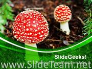 RED TOP MASHROOMS NATURE THEME POWERPOINT TEMPLATE