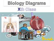 Biology Important Diagrams For Class Xth CBSE
