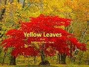1-Fall-1-Yellow Leaves