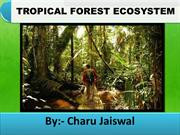 tropical forest ecosystem
