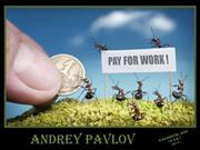 Ants. Illustrations by Andrey Pavlov